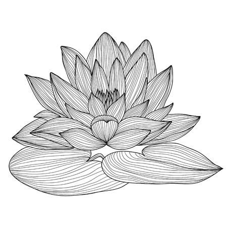 Elegant decorative lotus flower, design element. Floral branch. Floral decoration for vintage wedding invitations, greeting cards, banners. Illustration