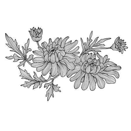 Elegant decorative chrysanthemum flowers, design element. Floral branch. Floral decoration for vintage wedding invitations, greeting cards, banners. Vector