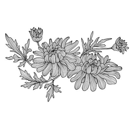 golden daisy: Elegantes flores de crisantemo decorativos, elemento de dise�o. Rama floral. Decoraci�n floral para las invitaciones de boda vintage, tarjetas de felicitaci�n, pancartas.