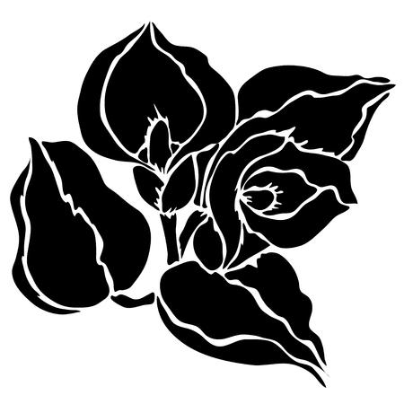 Elegant decorative calla flowers, design element. Floral branch.  Vector