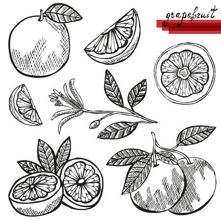 Hand drawn decorative grapefruits, whole and sliced, and grapefruit flower. Design elements. Citrus fruits. Can be used for cards, invitations, scrapbooking, print, manufacturing Vetores