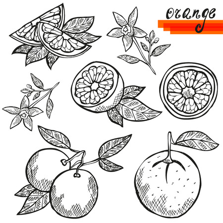 tropical fruit: Hand drawn decorative orange fruits, whole and sliced, and orange flower. Design elements. Citrus fruits. Can be used for cards, invitations, scrapbooking, print, manufacturing