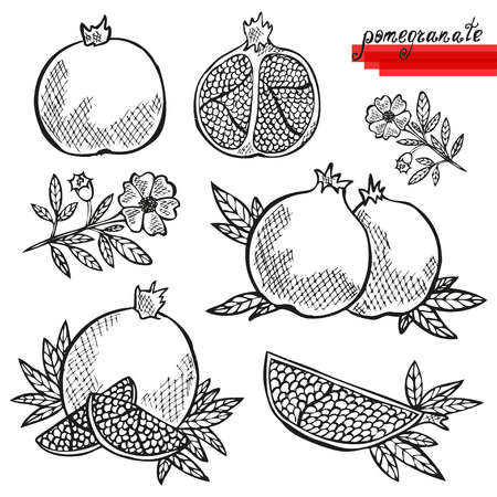 Hand drawn decorative pomegranates, whole and sliced, and pomegranate flower. Design elements. Can be used for cards, invitations, scrapbooking, print, manufacturing Vector