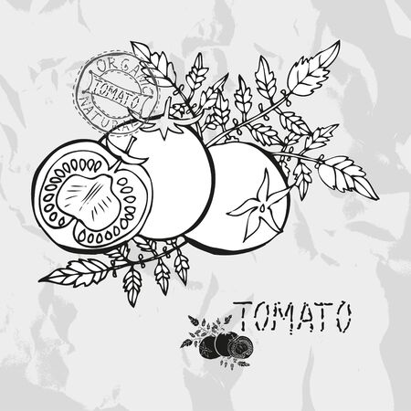 Hand drawn whole and sliced tomatoes with leaves, design elements. Vegetable. Can be used for cards, invitations, gift wrap, print, scrapbooking. Kitchen theme