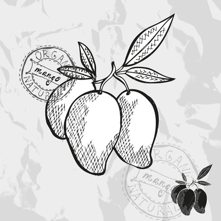 mango leaf: Hand drawn decorative mango fruits, design elements. Can be used for cards, invitations, gift wrap, print, scrapbooking. Kitchen theme