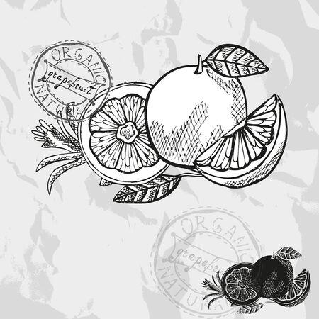 toronja: Dibujado a mano pomelos decorativas, elementos de dise�o. Colecci�n c�trico. Puede ser utilizado para las tarjetas, invitaciones, papel de regalo, la impresi�n, el scrapbooking. Tema de la cocina