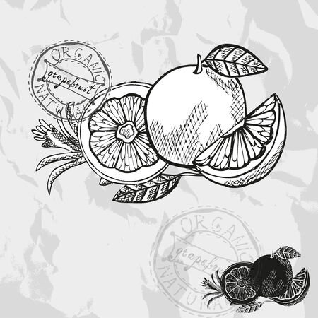 grapefruit: Hand drawn decorative grapefruits, design elements. Citrus collection. Can be used for cards, invitations, gift wrap, print, scrapbooking. Kitchen theme