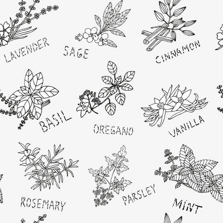 condimentos: Modelo incons�til elegante con dibujados a mano las hierbas y condimentos decorativas, elementos de dise�o. Puede ser utilizado para las invitaciones, tarjetas de felicitaci�n, scrapbooking, de impresi�n, papel de regalo, de fabricaci�n. Fondo de alimentos
