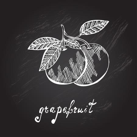 grapefruits: Hand drawn decorative grapefruits, design elements Illustration