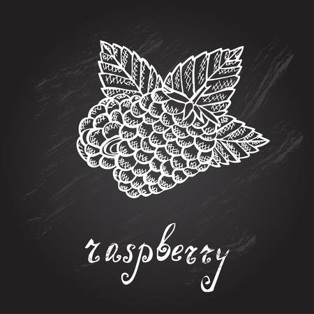 raspberries: Hand drawn decorative raspberries, design elements