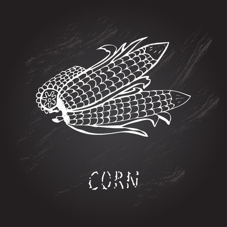 mais: Hand drawn decorative corns, design elements. Can be used for cards, invitations, gift wrap, print, scrapbooking. Kitchen theme. Chalkboard background Illustration