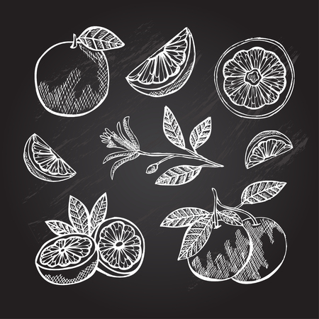 grapefruits: Hand drawn decorative grapefruits, design elements. Can be used for cards, invitations, gift wrap, print, scrapbooking. Kitchen theme. Chalkboard background Illustration