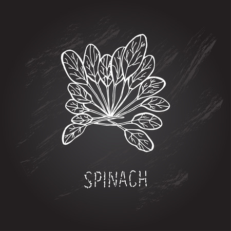 spinach: Hand drawn decorative spinach, design elements. Can be used for cards, invitations, gift wrap, print, scrapbooking. Kitchen theme. Chalkboard background