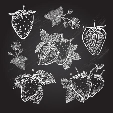 fresa: Dibujado a mano fresas decorativas, elementos de diseño. Puede ser utilizado para las tarjetas, invitaciones, papel de regalo, la impresión, el scrapbooking. Tema de la cocina. Fondo de la pizarra