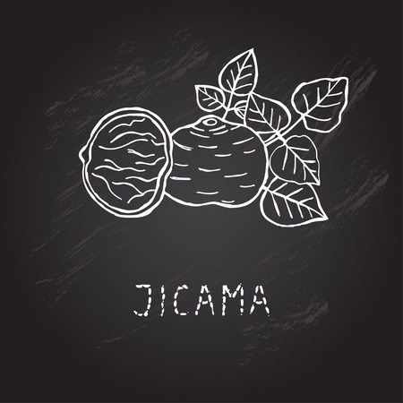 Hand drawn decorative jicama, design element. Can be used for cards, invitations, gift wrap, print, scrapbooking. Kitchen theme. Chalkboard background. Sketch