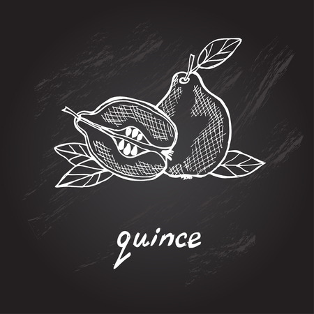 quince: Hand drawn decorative quince, design element. Can be used for cards, invitations, gift wrap, print, scrapbooking. Kitchen theme. Chalkboard background. Sketch