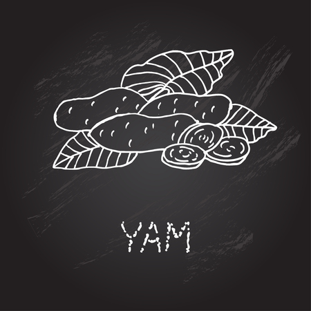 yam: Hand drawn decorative yam, design element. Can be used for cards, invitations, gift wrap, print, scrapbooking. Kitchen theme. Chalkboard background. Sketch