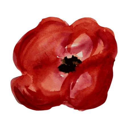 red poppy: Decorative watercolor red poppy flower, design element.