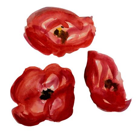 poppy flowers: Decorative watercolor red poppy flowers, design elements.