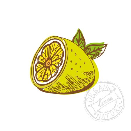 sliced fruit: Hand drawn decorative sliced lemon fruit, design element. Can be used for cards, invitations, gift wrap, print, scrapbooking. Kitchen theme