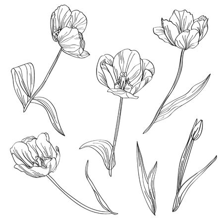 skecth: Elegant hand drawn decorative tulips set, design elements. Floral branches. Floral decorations for invitations, greeting cards, banners, patterns, print, fabric, manufacturing Illustration