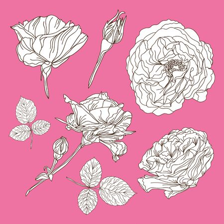 skecth: Elegant hand drawn decorative roses set, design elements. Floral branches. Floral decorations for invitations, greeting cards, banners, patterns, print, fabric, manufacturing