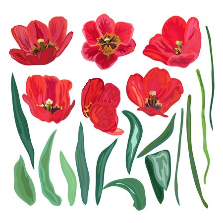skecth: Elegant hand drawn decorative tulips elements set. Floral decorations for invitations, greeting cards, banners, patterns, print, fabric, manufacturing Illustration