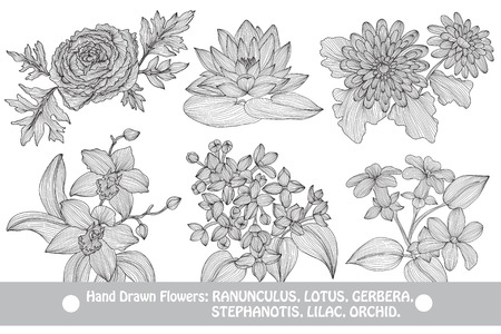waterlily: Elegant decorative flowers, design elements. Floral branches. Floral decorations for vintage wedding invitations, greeting cards, banners