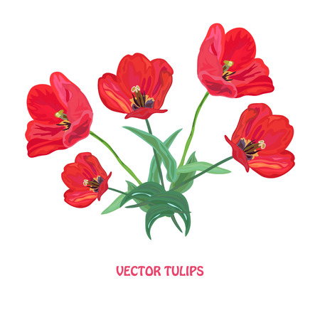 red tulip: Elegant hand drawn red tulip flowers, design elements. Can be used for wedding, baby shower, mothers day, valentines day cards, invitations, banners, posters, scrapbooking, gift paper ornament Illustration