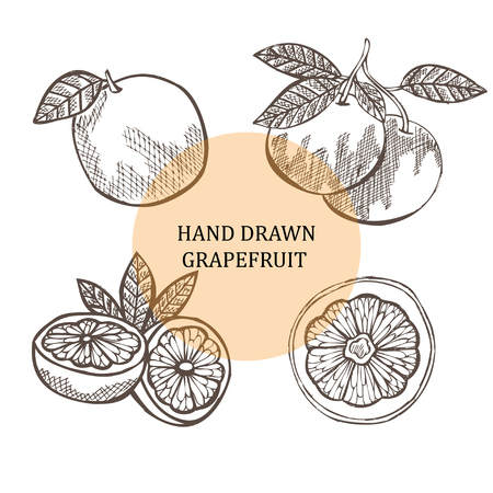grapefruits: Hand drawn decorative grapefruits, design elements. Can be used for cards, invitations, gift wrap, print, scrapbooking. Citrus