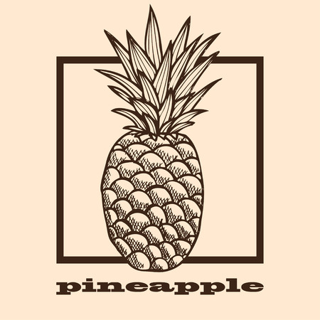 pine apple: Hand drawn decorative pineapple fruit, design element. Can be used for cards, invitations, gift wrap, print, scrapbooking, labels, flyers, posters, menu. Food background. Fruit theme Illustration