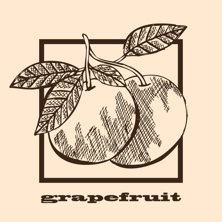 grapefruits: Hand drawn decorative grapefruits, design elements. Can be used for cards, invitations, gift wrap, print, scrapbooking, labels, flyers, posters, menu. Food background. Fruit theme Illustration