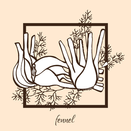 fennel: Hand drawn decorative fennel, design elements. Can be used for cards, invitations, gift wrap, print, scrapbooking, food menu, labels. Vegetable background. Food theme