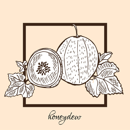 HONEYDEW: Hand drawn decorative honeydew fruits, design elements. Can be used for cards, invitations, gift wrap, print, scrapbooking, labels, flyers, posters, menu. Food background. Fruit theme