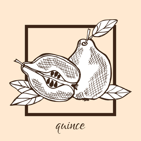 quince: Hand drawn decorative quince fruits, design elements. Can be used for cards, invitations, gift wrap, print, scrapbooking, labels, flyers, posters, menu. Food background. Fruit theme