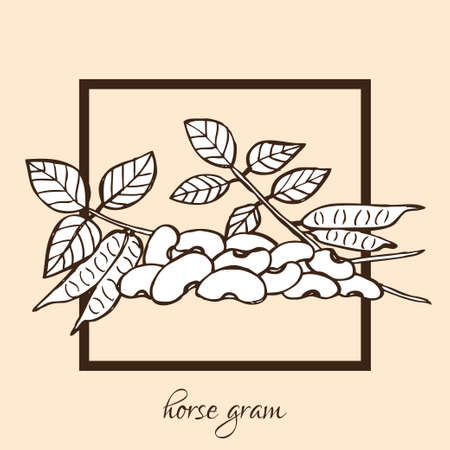 gram: Hand drawn decorative horse gram, design elements. Can be used for cards, invitations, gift wrap, print, scrapbooking, food menu, labels. Vegetable background. Food theme