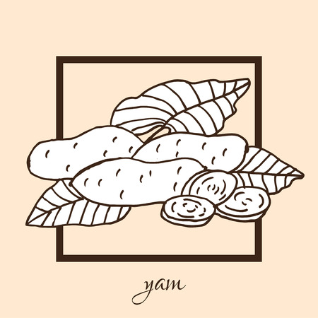 yam: Hand drawn decorative yam, design elements. Can be used for cards, invitations, gift wrap, print, scrapbooking, food menu, labels. Vegetable background. Food theme