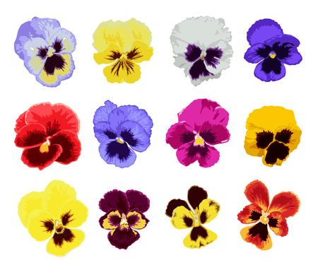 우아한 장식 벡터 팬 꽃 수채화 스타일, 디자인 요소. 결혼식 초대장, 인사말 카드, 배너 꽃 장식. 모든 요소는 편집 가능합니다.