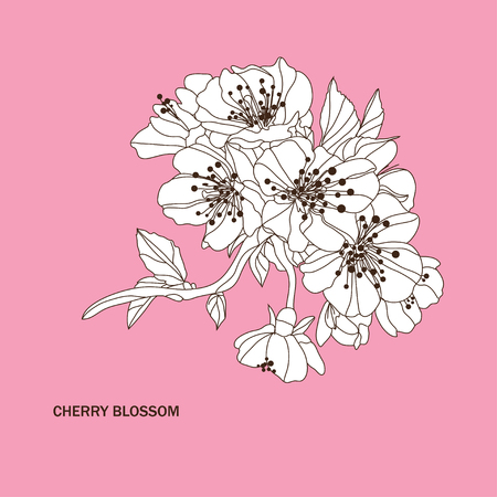 petal: Elegant hand drawn decorative cherry blossom flowers, design element. Floral branch. Floral decoration for invitations, cards, posters, banners, print, scrapbooking, manufacturing. Vintage flowers Illustration