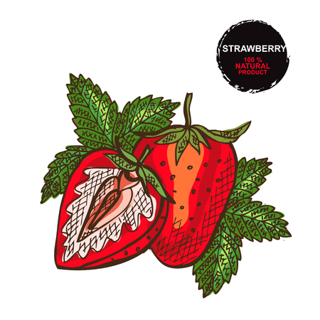 Hand drawn decorative strawberry fruits, design elements. Can be used for cards, invitations, gift wrap, print, scrapbooking. Food theme. Editable Illustration