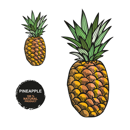Hand drawn decorative pineapple fruits, design elements. Can be used for cards, invitations, gift wrap, print, scrapbooking. Food theme. Editable