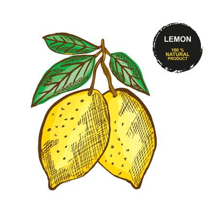 Hand drawn decorative lemon fruits, design elements. Can be used for cards, invitations, gift wrap, print, scrapbooking. Food theme. Editable