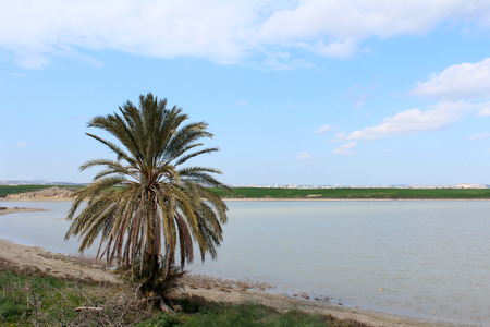 Green palm tree on Larnaca Salt Lake (Cyprus) background. Tropical, exotic tree. Nature. Environment Stock Photo