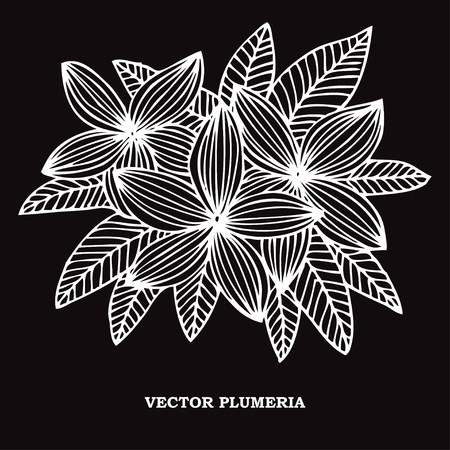 Elegant hand drawn decorative plumeria flowers, design element. Floral decoration for cards, invitations of wedding, birthday, valentines, holidays, events Illustration