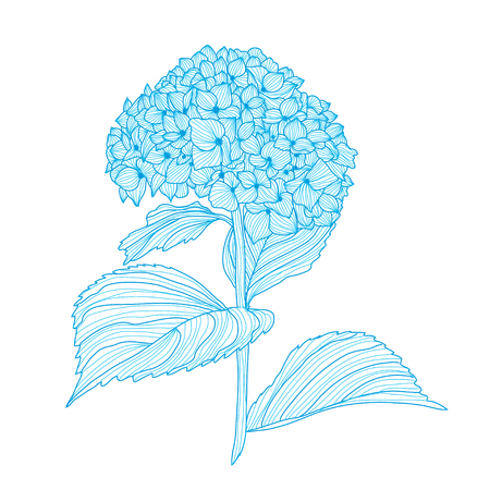 Elegant hand drawn decorative hydrangea flower, design element. Ilustração