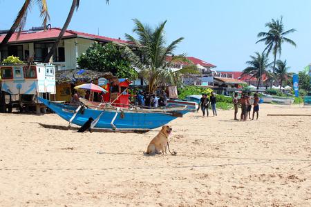 December 25, 2017, dog sitting at Hikkaduwa Beach in Hikkaduwa, Sri Lanka. Popular touristic asian destination. Seascape. Landscape. Vacation