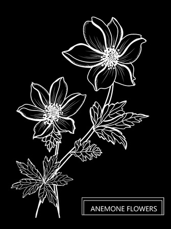 Decorative anemone flowers, design elements. Can be used for cards, invitations, banners, posters, print design. Floral background in line art style Illustration