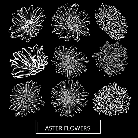 Decorative aster flowers set, design elements. Can be used for cards, invitations, banners, posters, print design. Floral background in line art style