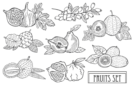 Ensemble de fruits décoratifs dessinés à la main, éléments de conception. Peut être utilisé pour les cartes, les invitations, le scrapbooking, l'impression, la fabrication. Nourriture, thème de la cuisine. Style d'art en ligne Vecteurs