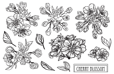 Decorative sakura  flowers set, design elements. Can be used for cards, invitations, banners, posters, print design. Floral background in line art style  イラスト・ベクター素材